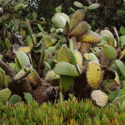 Kate's Cactus